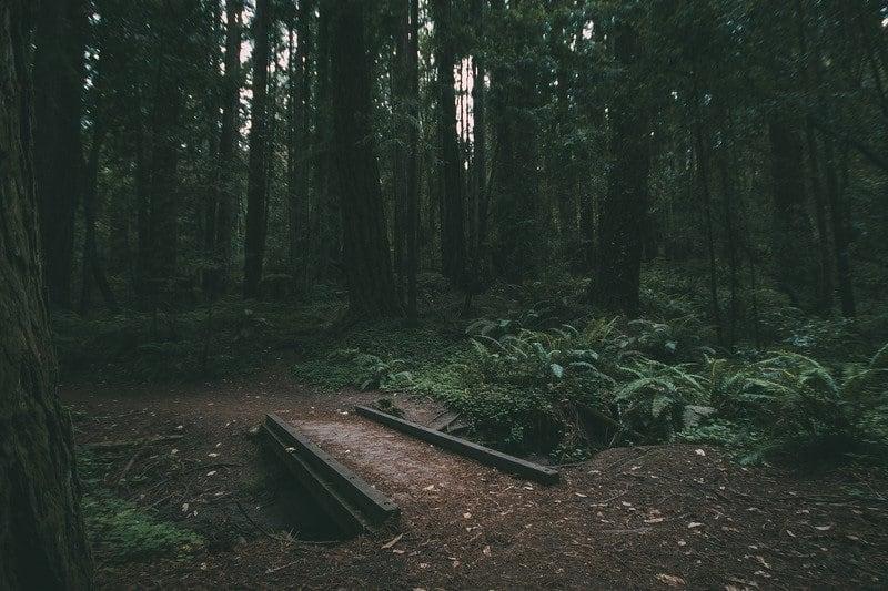 Waihou Spring Trail – A Hike For All