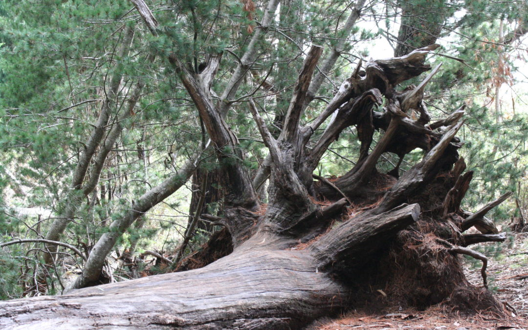 Olinda Forest – Discover Upcountry Maui