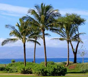 Maui Vacation Rentals great for family vacations.