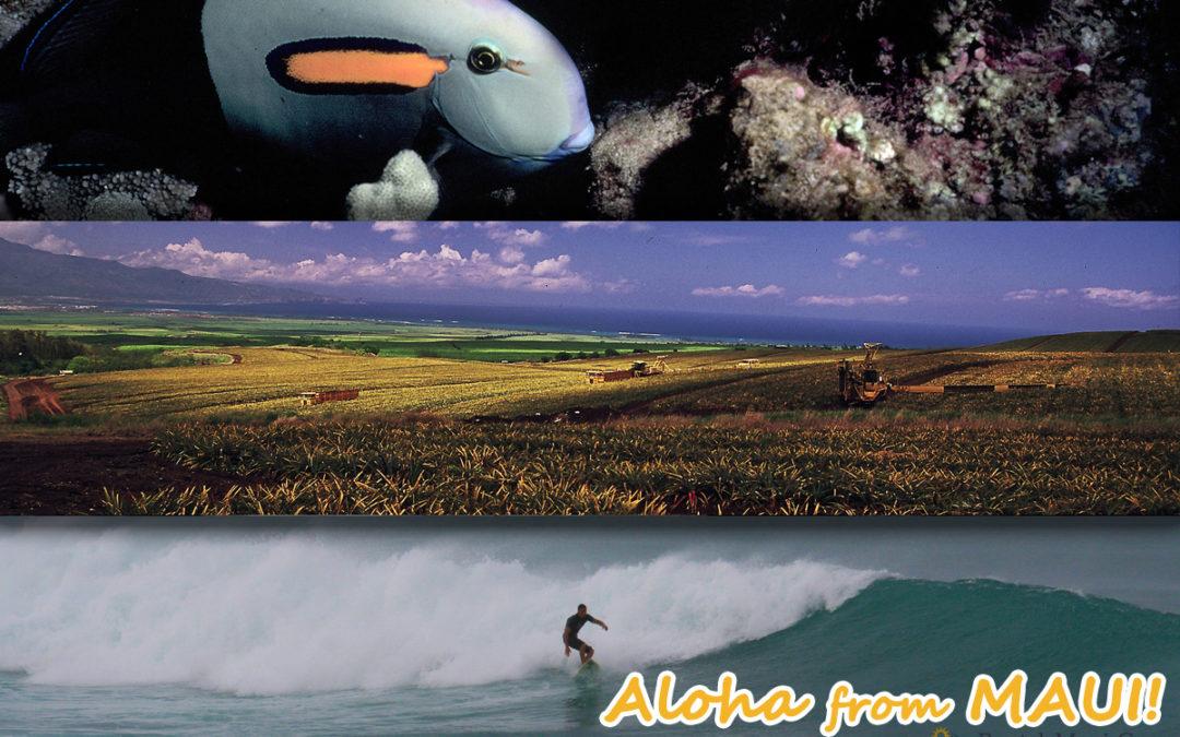 Maui Adventure Spotlight – Surfing Pineapples