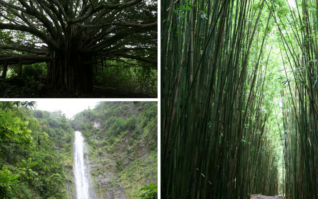 Hike Through Bamboo on the Pipiwai Trail