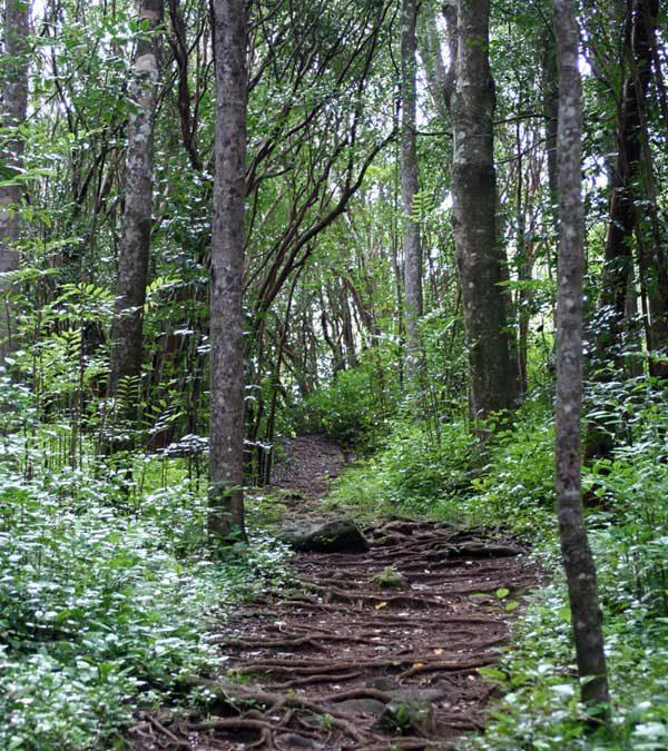 West Maui Hiking – Waihee Ridge Trail